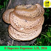 Виды грибов фото и описание