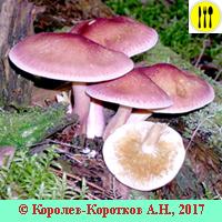 Какие грибы можно собирать в сентябре