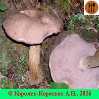 Виды несъедобных грибов с фото и описанием